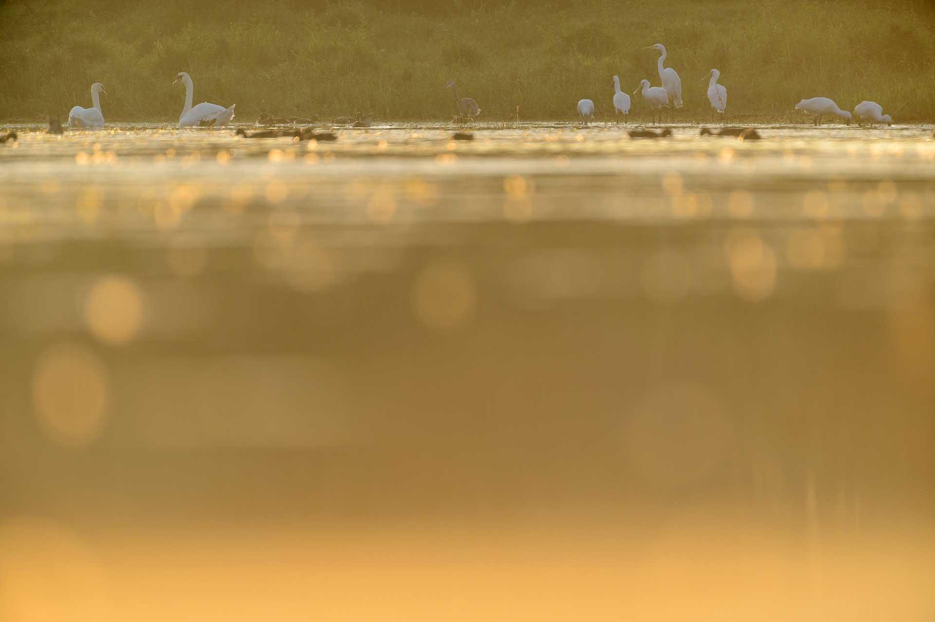Vogels in de vroege ochtend in de Blauwe Kamer