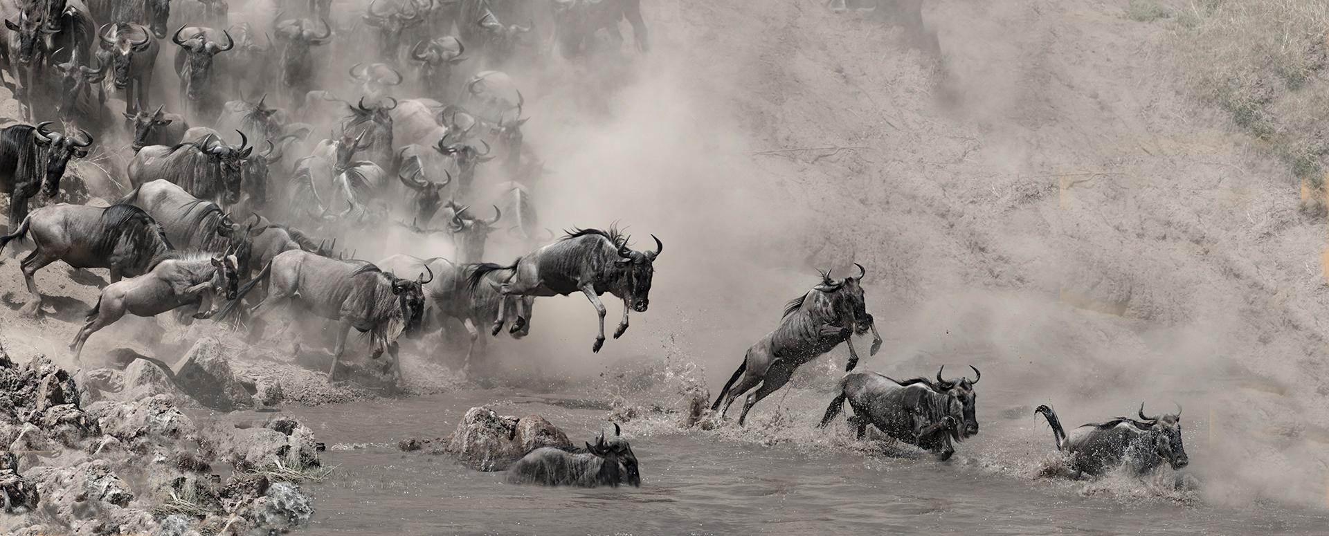 Gnoes springen in de Mara rivier