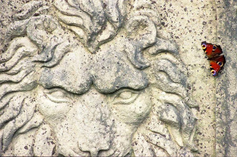 Leer kijken als een fotograaf en herken foto's als deze, van een leeuwenbeeld en een dagpauwoog.