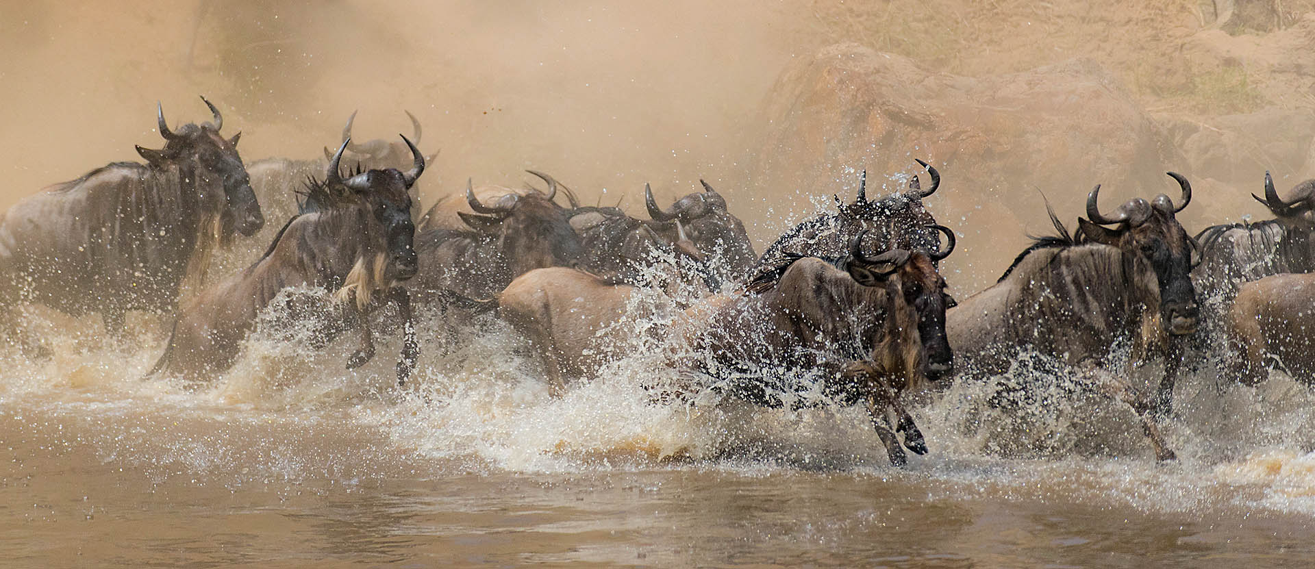 Wildebeest cross the Mara river. Image by Todd Gustafson.