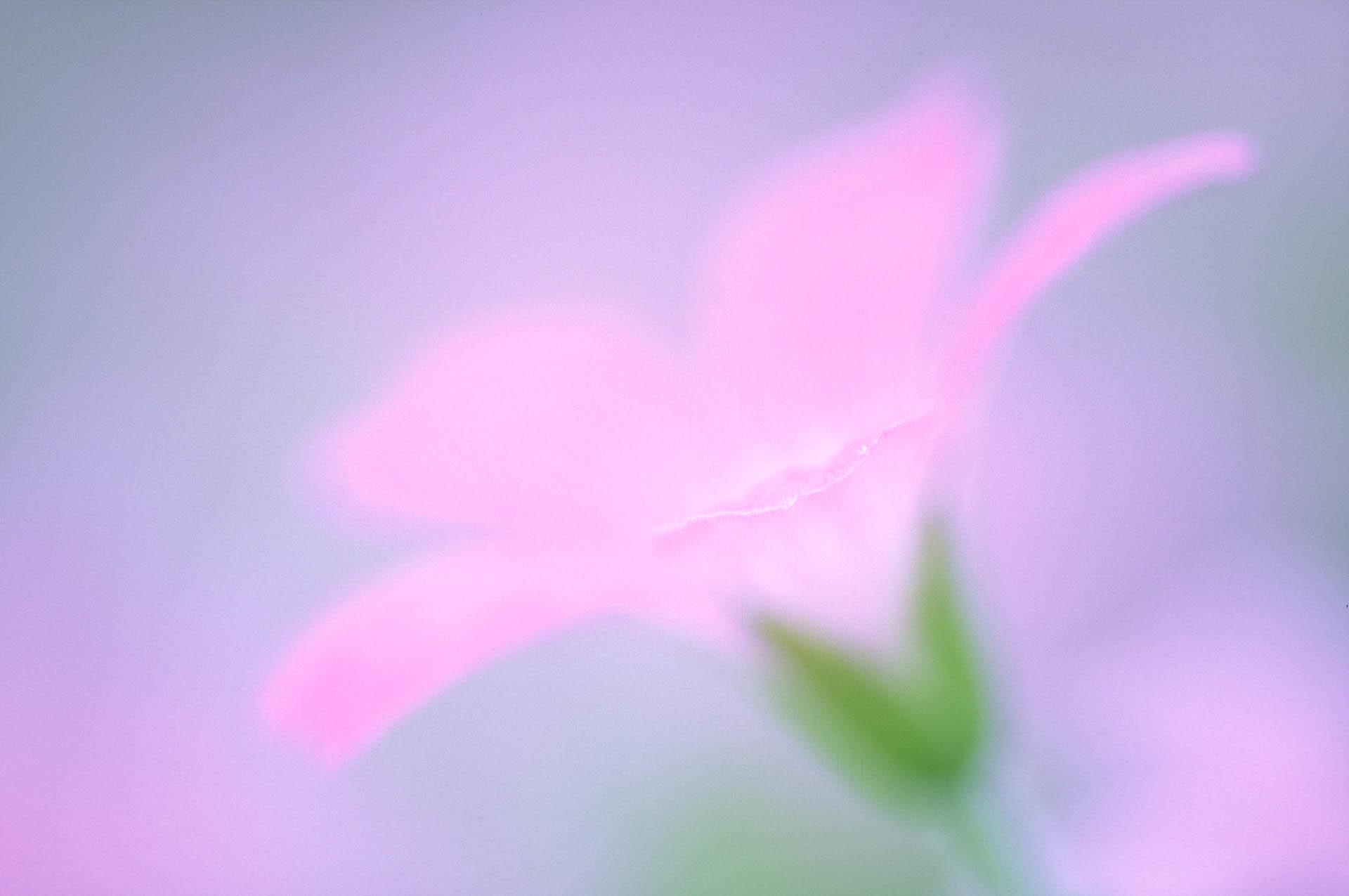 Creatieve bloemenfotografie