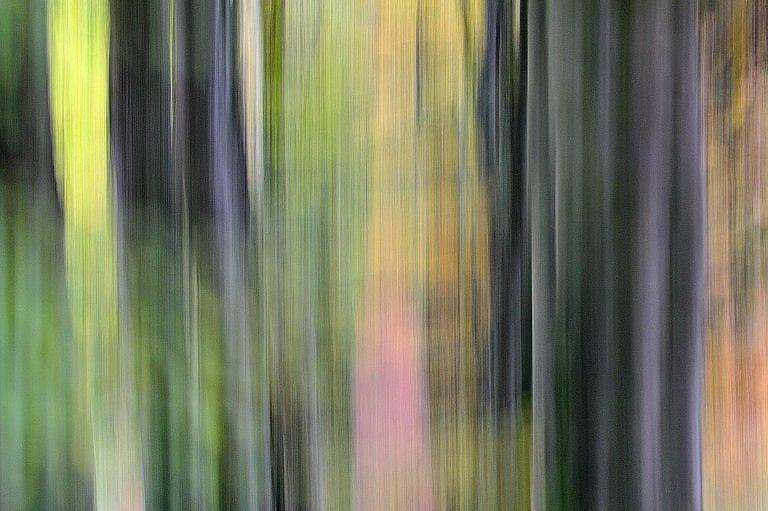 Creatieve panning fotografie in Nationaal Park Veluwezoom