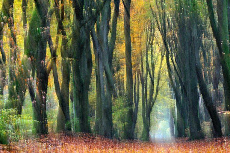 Creatieve beweging in het Speulderbos