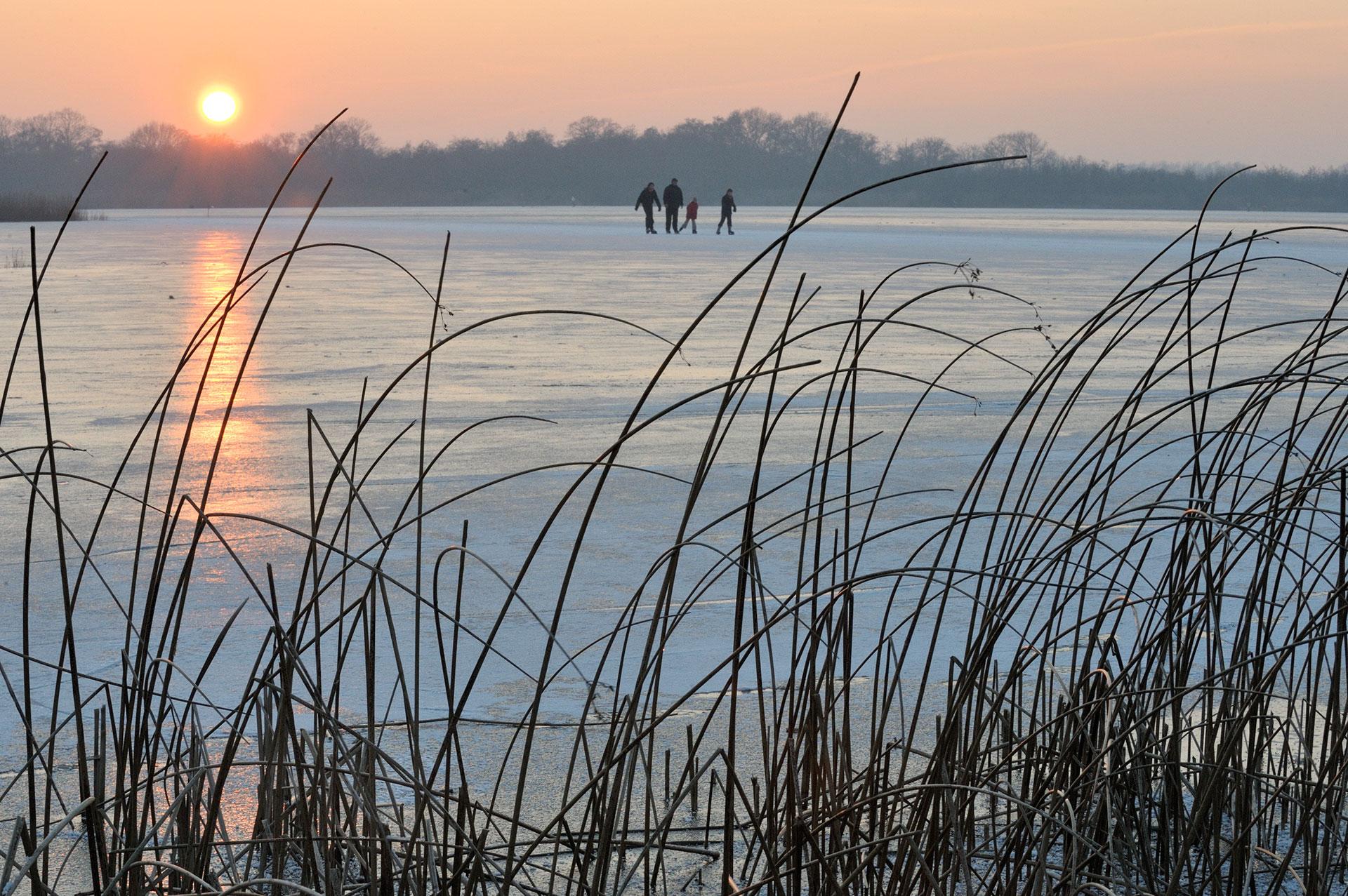 Schaatsers op de Ankeveense Plassen met op de voorgrond biezen.