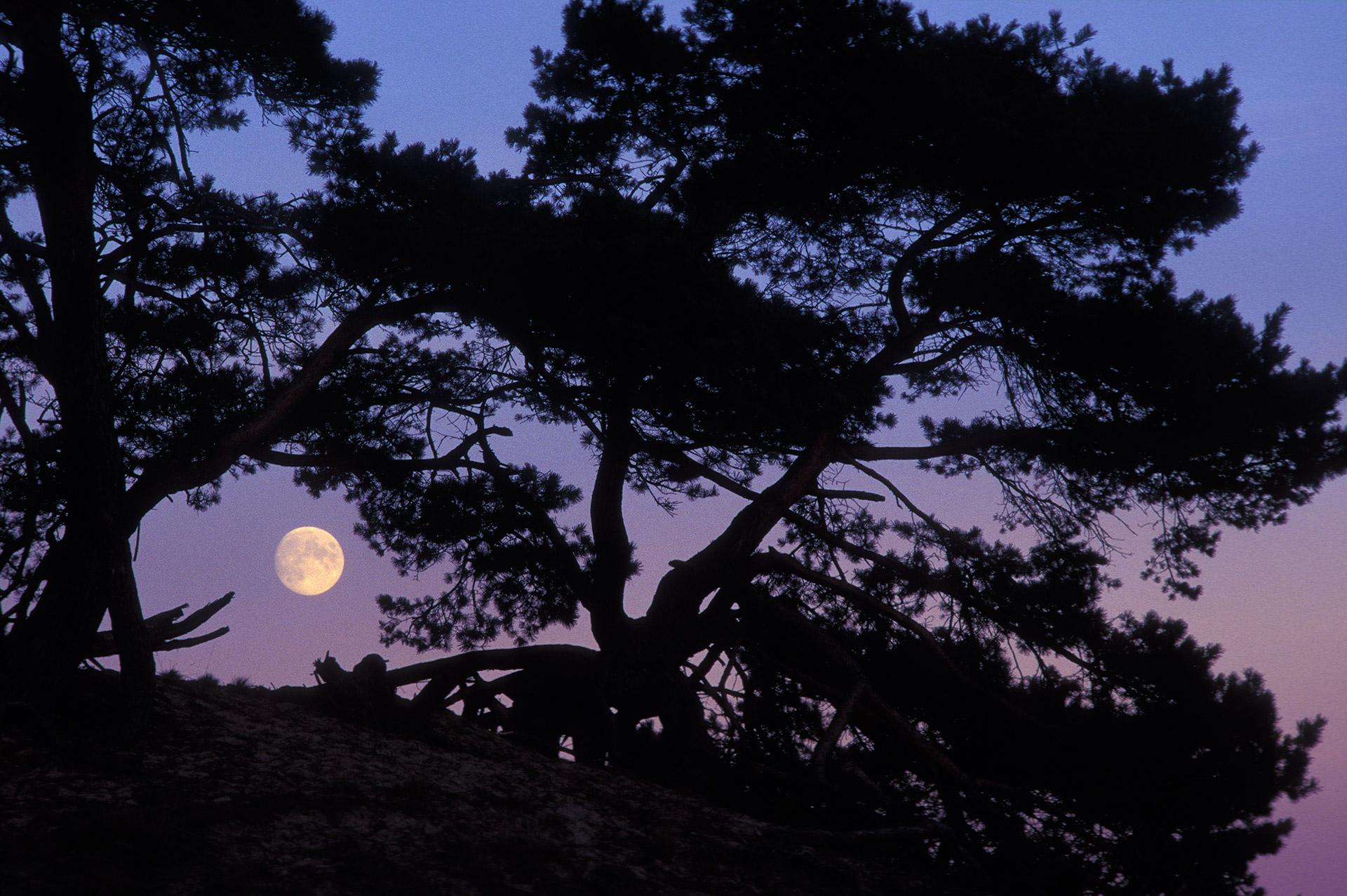 De maan laat zich zien door een grote vliegden, na zonsondergang.