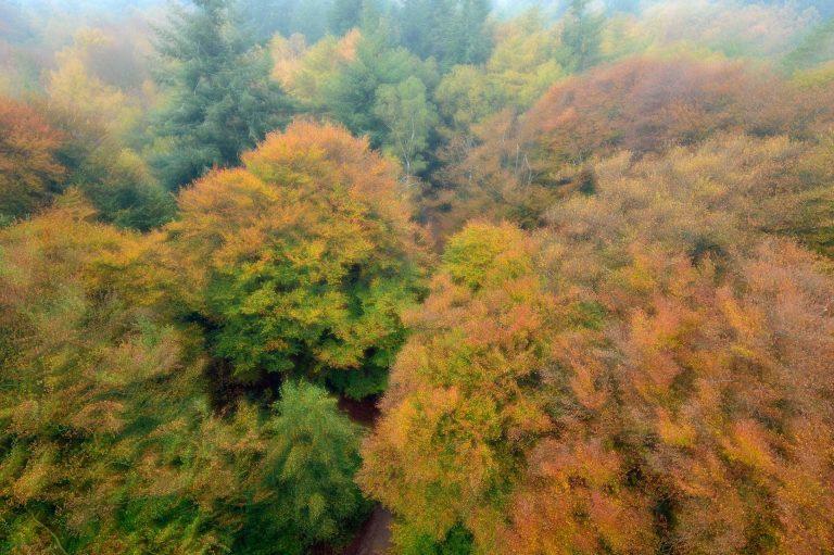 Bij deze workshop fotograferen we ook de herfstig gekleurde bomen vanaf uitzichttoren De Kaap.