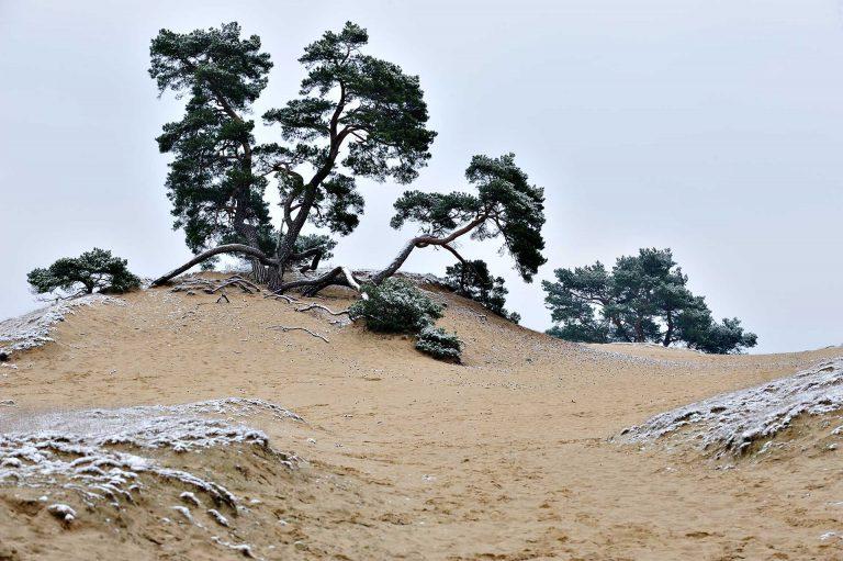 Vliegden en zand met rijp