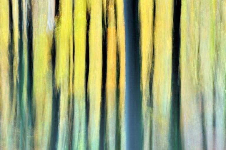 Creatieve bomenfotografie op de Duivelsberg