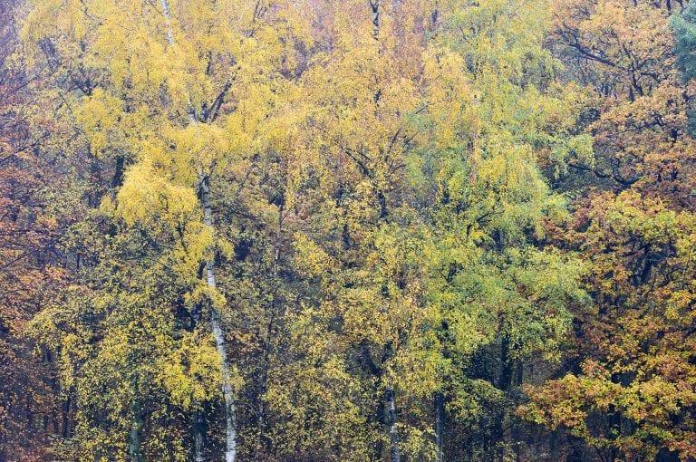 Een bosrand met verschillende soorten bomen en herfst kleuren op de Duivelsberg