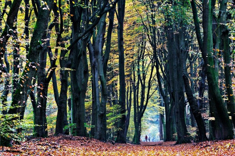 Herfst sfeer in het Speulderbos
