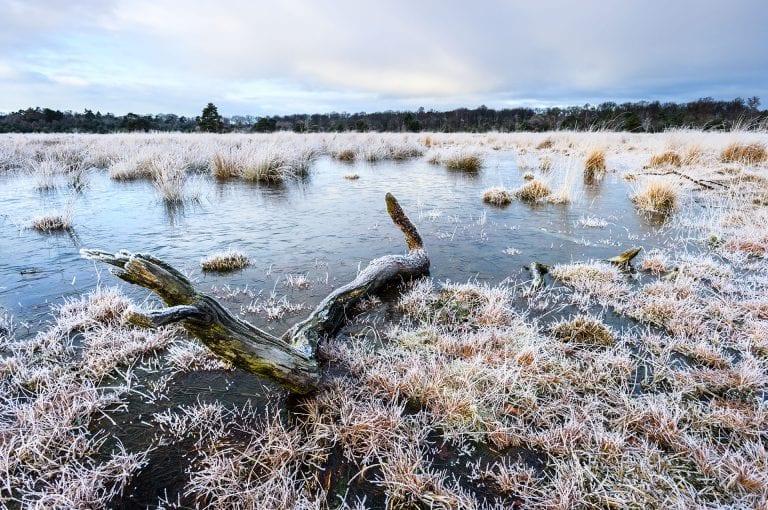 Leersumse Veld in winter met rijp