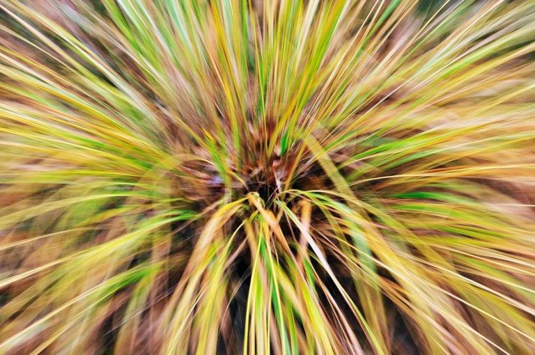 Creatieve foto van het gras pijpestootje in Nationaal Park Veluwezoom