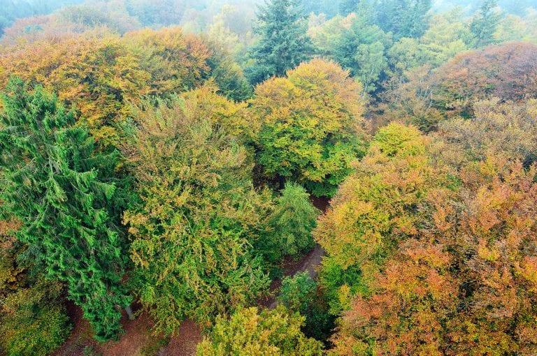 Vanuit de uitkijktoren kijk je bovenop de kruinen van de in herfstkleuren getooide bomen.
