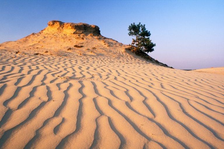Ribbelpatroon in zandduin bij zonsondergang op het Kootwijkerzand